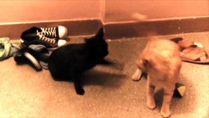 Śmieszna Walka Kotów / Funny Cat Fight- Baw się z nami