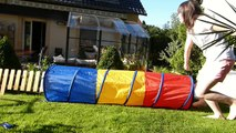 Samoyed Training  ( obérythmée - agility ) 10 months