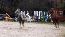 Quand les poneys retrouvent la liberté