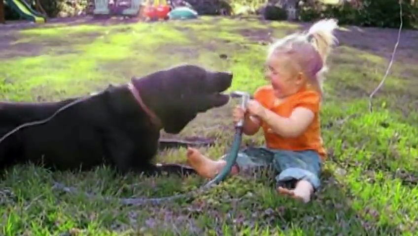 Labradors Are Awesome