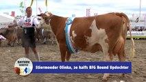 BG Fleckvieh - Stiermoeder Olinka, 2e kalfs BFG Round Updochter