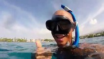 Snorkeler Explores Underwater Life Near Hawaiian Coastline
