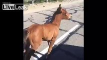 Guy reunites foal with its mother