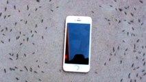 Non cette vidéo ne prouve pas que les ondes téléphoniques influencent les fourmis (ni notre cerveau)