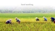 Yen Duc village ( Vietnam) -  Halong Bay plus experience