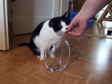 Nelly the funny cow cat brings her food from the crystal vase 2008-12-14_13-40-33.MP4