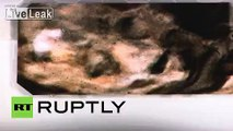 Mexico: Unseen Roswell 'alien' pics unveiled in Mexico City