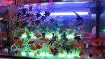 Wish with fish ตอน Fishvillage ราชบุรี ตอน2 ช่วง3