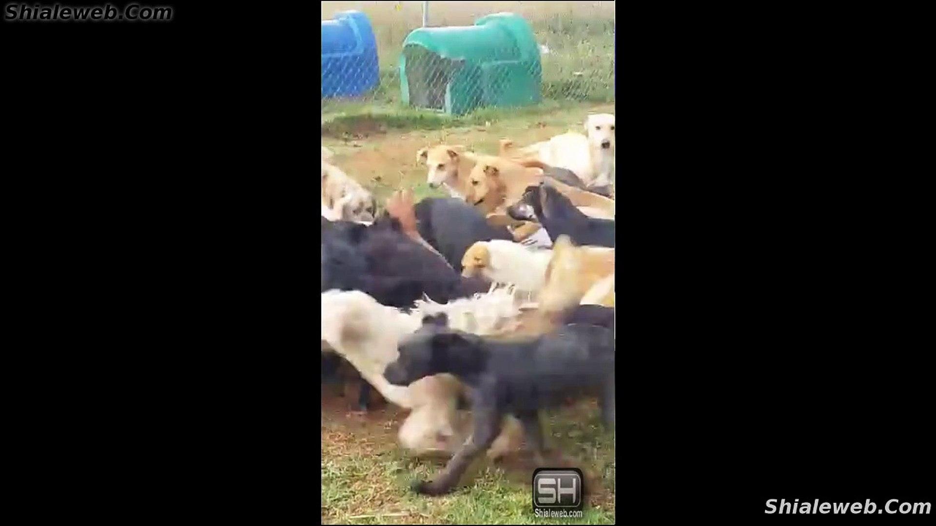 SORPRENDENTE VIDEO ANIMAL DE UN HOMBRE CON SUS PERROS MASCOTAS JUGANDO JUNTOS SEPTIEMBRE 2015