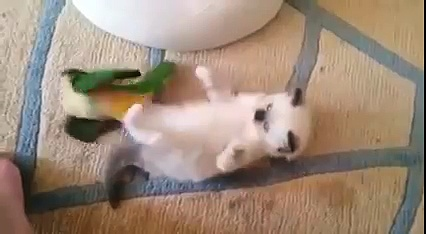 fight !!! funny Animals Funny Animals