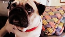 Funny Clips   Collection of Funny Animals   Funny Animal   Animal Clip