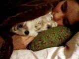 Miley Cyrus Stewart Hannah Montana KCA new puppy dog Sophie Sofie Cyrus NAVY Family