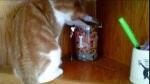 (3) Kyoot Animals - Cat Thieves