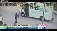 Fedex Driver Steals Puppies CCTV VIDEO Fedex Driver Steals Puppies CAUGHTon Tape