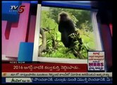 """Problems Of Animals In India's Biggest """"Nehru Zoological Park"""" : TV5 News 