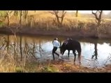 Horse discovers the joys of water for the first time.
