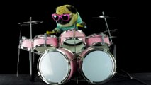 Funny Bulldog plays Metallica Enter Sandman on the drums