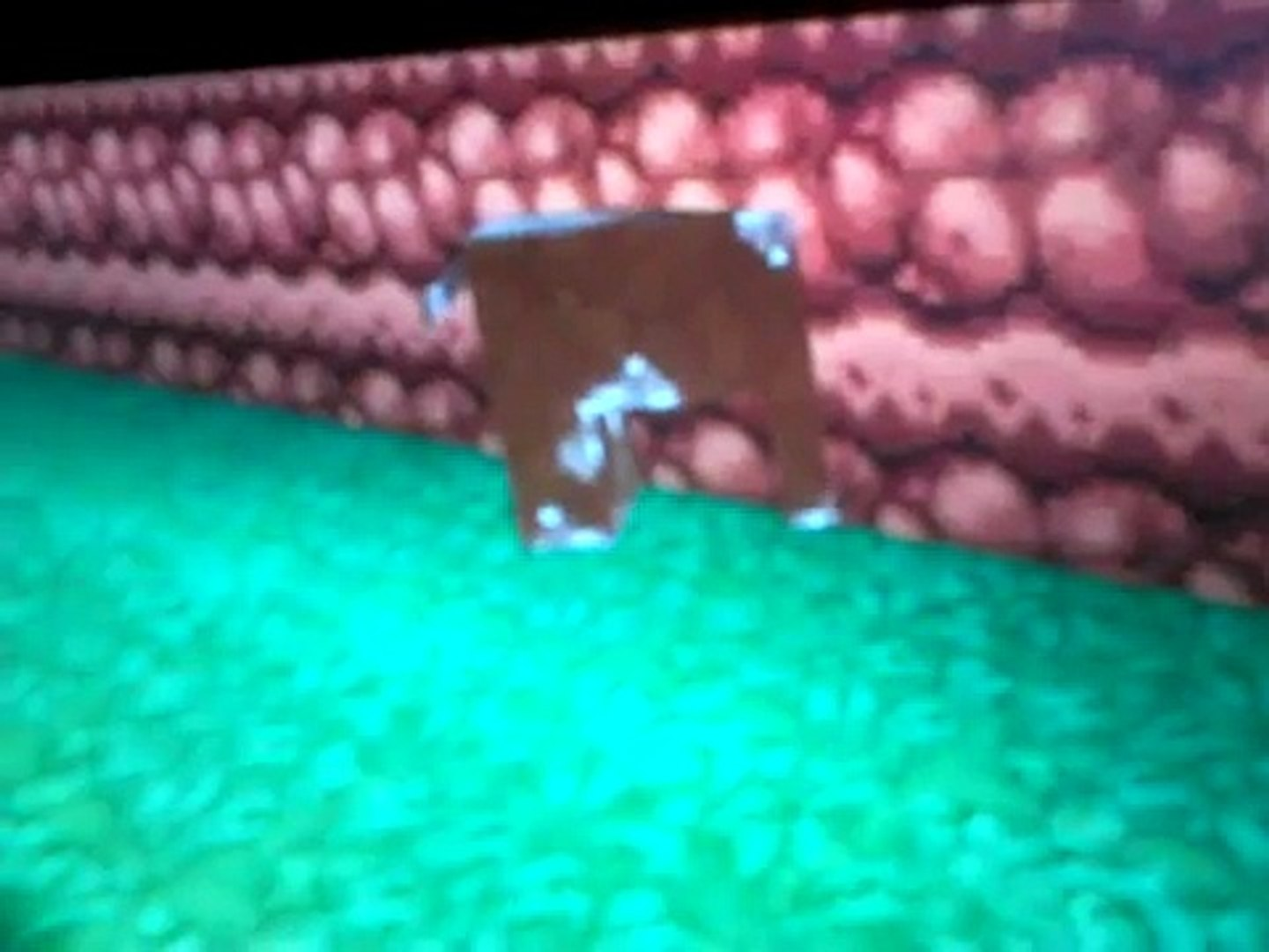 Cow stuck in a wall glitches!