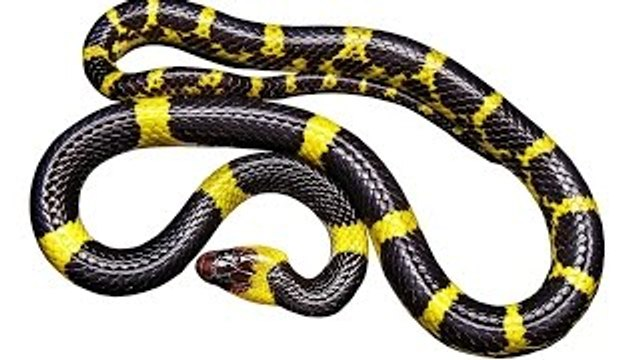 10 Facts About Snakes