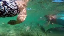 Poipo Beach Kauai Hawaii - Snorkeling near the reef with tropical fish