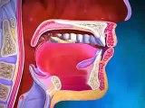 Santé Pratique   vidéo santé 3D expliquant le fonctionnement du corps humain avec Santé Pratique