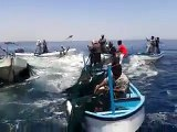 Fish in Gaza sea jumping into fishermen boats during ceasefire