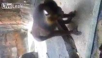 bad bad monkey !