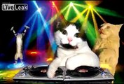 Kitty Cat Dance Party Music Video Extravaganza