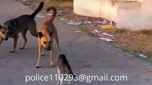 Dog - Cat: funny cats - dog videos, full - funny clips (dog - cat videos) p 15