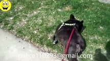 Dog - Cat: funny cats - dog videos, full - funny clips (dog - cat videos) p 19