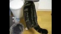 Я в домике !))смешные коты! приколы! смешные животные!  / fun! funny animals!  funny cats! humor!