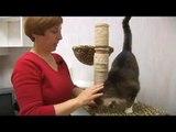 Cat Environment Enrichment Tips : Cat Environment Enrichment: Social Interaction