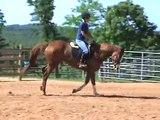 Carolina Sport Horses  Zoe Cantering.  Flying Lead Changes.