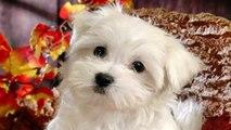 Teamwork dog rescue in Kazakhstan - Video Dailymotion