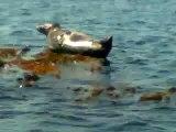 balade en mer ( phoque) kérity/penmarch