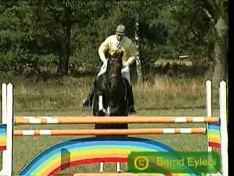 Alejandro Horses