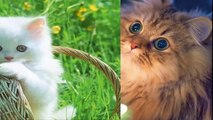 funny cat videos,cat breeds, cat games, cat videos, cats, cats and dogs,