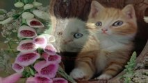 funny cat videos,cat games, cat rescue, cats, cats and dogs, cats for adoption,