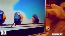 Best Funny Animals Compilation - Funny Animal Videos | best funny animals compilation 2015