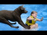 Labradors Are Awesome Part 2: Compilation
