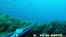 A pesca sui banchi del canale di Sicilia - pesca sub apnea spearfishing