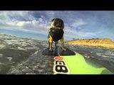 AFV Goes Pro: Brandy the Surfing Pug