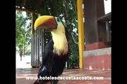Bahia solano. Historia del hotel Playa de oro. Turismo ecológico y de aventura en Bahia Solano
