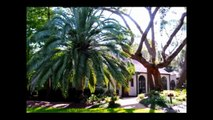Buy A Pindo Palm Tree, Butia capitata - Date Palms (Jelly Palm Trees)