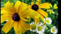 SC Johnson Trail Summer Wildflowers, Brantford Canada