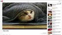 Cats post their own photos to Instagram with WHISKAS CATSTACAM™