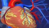 Cholestérol   Symptômes , Définition , Diagnostic , Traitements