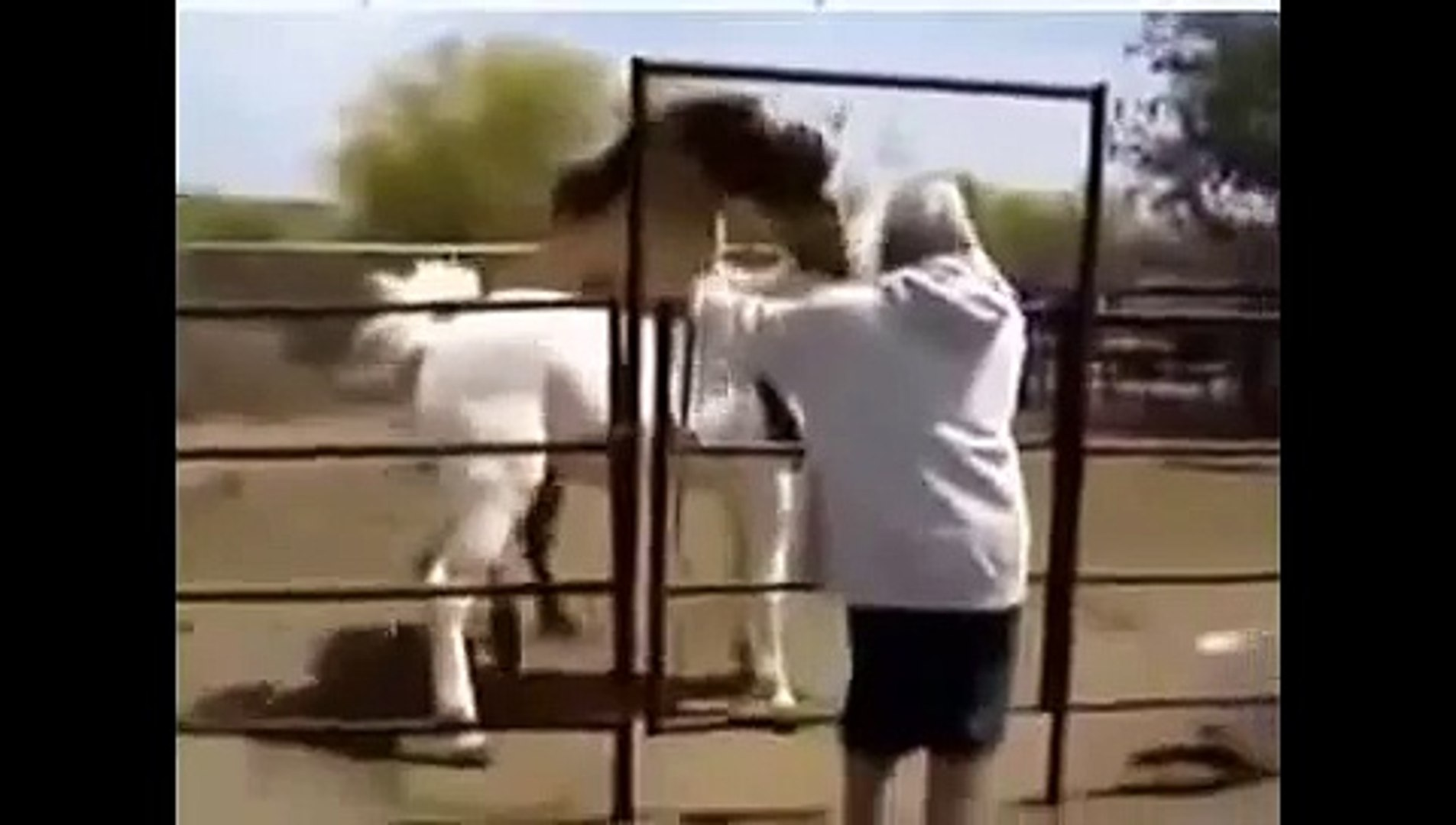 Animals mate Animal mate horses  animal life Animal funny