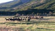 CABALLOS SALVAJES TORRES DEL PAINE - TORRES DEL PAINE WILD HORSES