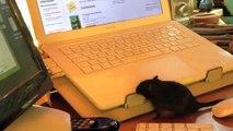 Die Liefer Maus Werbung (fake von lieferheld!! keine echte werbung! einfach fun!)
